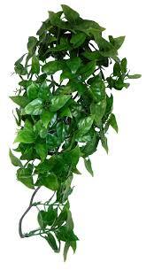 Hanging Plant Komodo Philodendron Plant 40 Cm Amazon Co Uk Pet Supplies