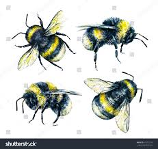 set bumblebees on white background watercolor stock illustration