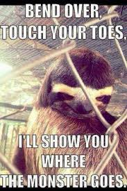 Asthma Sloth Meme - tauruses aye ha the sloth pinterest sloth sloth memes and memes