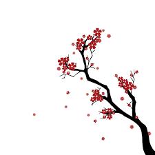 a japanese cherry blossom