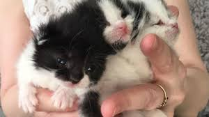 newborn kittens recovering after being rescued from factory