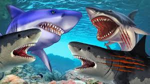 color shark videos children shark attack cartoons kids