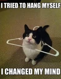Invisible Cat Memes - funny cat memes kitten meme