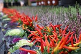 september gardening tips squire u0027s garden centre