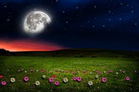 Moon Flowers Nature Flowers Moon Night Stars Hd Nature Beautiful Scenery