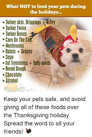 what not to feed your pets during the holidays turkey skin drippings