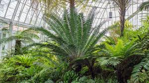 native plants australia list plant collections phipps conservatory and botanical gardens