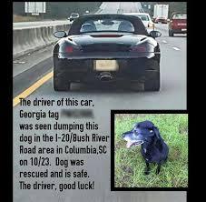 Dog Driving Meme - false porsche driver abandons dog in south carolina