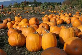halloween autumn background pumpkin patch halloween autumn wallpaper 1728x1152 480176