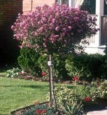 garden design garden design with landscape plants u trees on