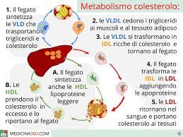 alimenti anticolesterolo colesterolo totale cos 礙 calcolo dei valori di hdl ldl e