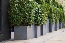 Tall Rectangular Planter by Cube 600s Are Interspersed With 1000mm Tall Custom Rectangular