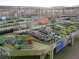 plant display at downtown garden centre trevor rickard