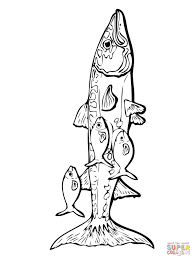 barracuda fish coloring page free printable coloring pages