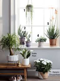 plants at home you can take care of plants at home family circle