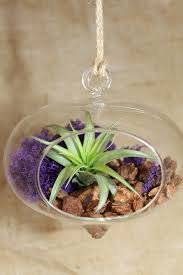 Orchid Bark Heart Shaped Terrarium With Air Plant Orchid Bark U0026 Reindeer Moss