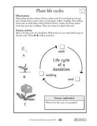 frog life cycle lesson plans u0026 worksheets reviewed by teachers