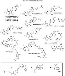 chemical structures of fluorescent neca derivatives abea