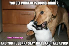 Dog Cat Meme - hey human do you really have to take a pic now funny cat meme