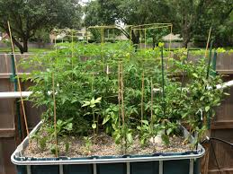 garden u2013 nat u0027s blog