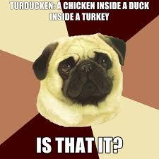 obesity pug thanksgiving