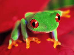 frog wallpaper 29