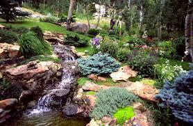 Water Rock Garden by Edwards Perennial Plants Colorado Alpines U0026 Wildflower Farm