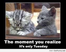 Tuesday Funny Memes - it s only tuesday funny meme of the day