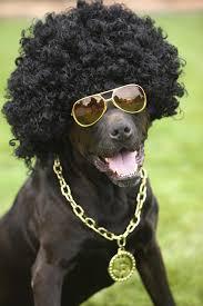 win free tickets to halloween horror nights doggie costume contest u2013 win cesar millan tickets