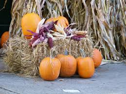 Halloween And Fall Decorations - autumn fall decorating halloween or thanksgiving tracy