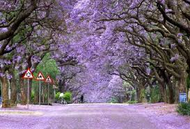 these trees are a to behold nature babamail