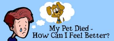 when a pet dies my pet died how can i feel better