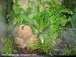 Fern Rock Garden Apartments Apt Garden How To Create A Naturalistic Vivarium