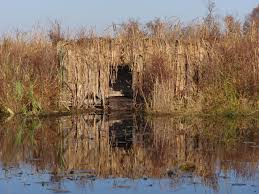 building a cattail blind michigan sportsman online michigan