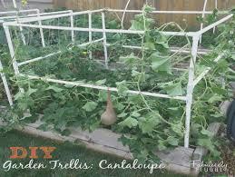 build a garden trellis ten unexpected ways build a garden trellis can make your