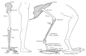 bone archives page 2 of 21 human anatomy charts