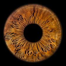 eyesight iris fotografie einzigartige bilder ihrer augen