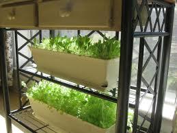 89 best edible balcony garden images on pinterest gardening
