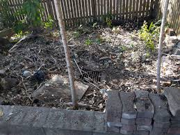 backyard rescue tarragindi lowndes landscapes