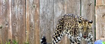 kansas city zoo halloween events tanganyika wildlife park interactive zoo for family fun