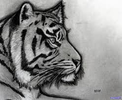 drawing a tiger face ideas how to draw a tiger tattoo design tiger