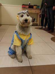 boxer puppy halloween costumes brookline veterinarian dog daycare u0026 dog walking beantown bed