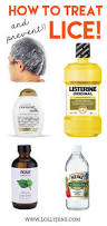 best 25 natural lice treatment ideas on pinterest natural lice