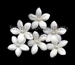 stephanotis flower best 25 stephanotis flower ideas ideas on stephanotis