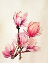 pin by maria on magnolia pinterest magnolia beautiful