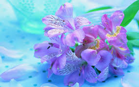 Beautiful Images Beautiful Flowers Wallpapers For Desktop Hd Group 78