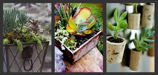 planting succulents container garden ideas bombay outdoors