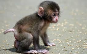 funny monkey a cute and naughty baby monkey youtube