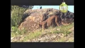 belgian malinois 101 youtube dogo argentino abc canino 101 dogs español youtube