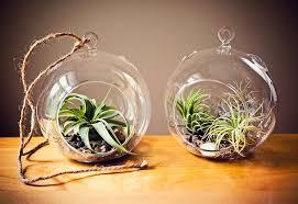 how to make an air plant terrarium u2013 for keeps blog